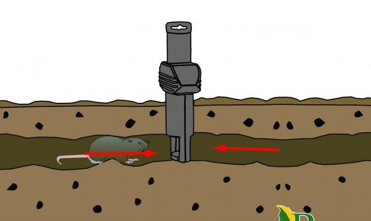 Кот Федор ловит земляных вредителей с двух сторон