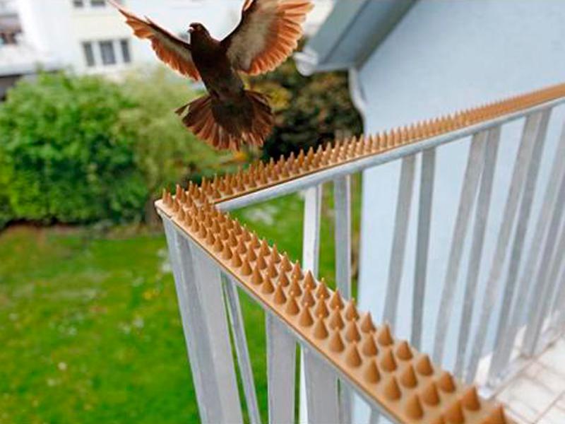 Принцип действия шипов от птиц