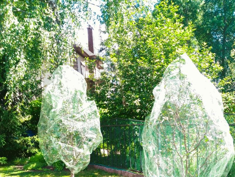 Применение сетки от птиц для деревьев