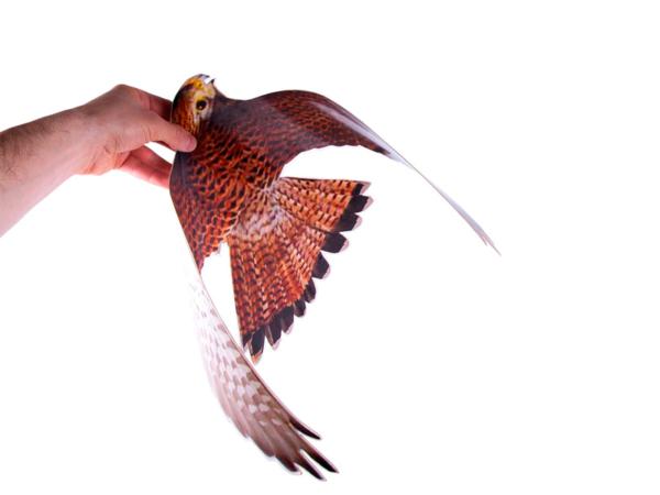 Внешний вид макеты птицы отпугивателя Хищник-3