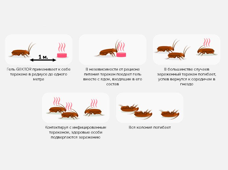 """Схема работы геля от тараканов """"Гектор"""""""