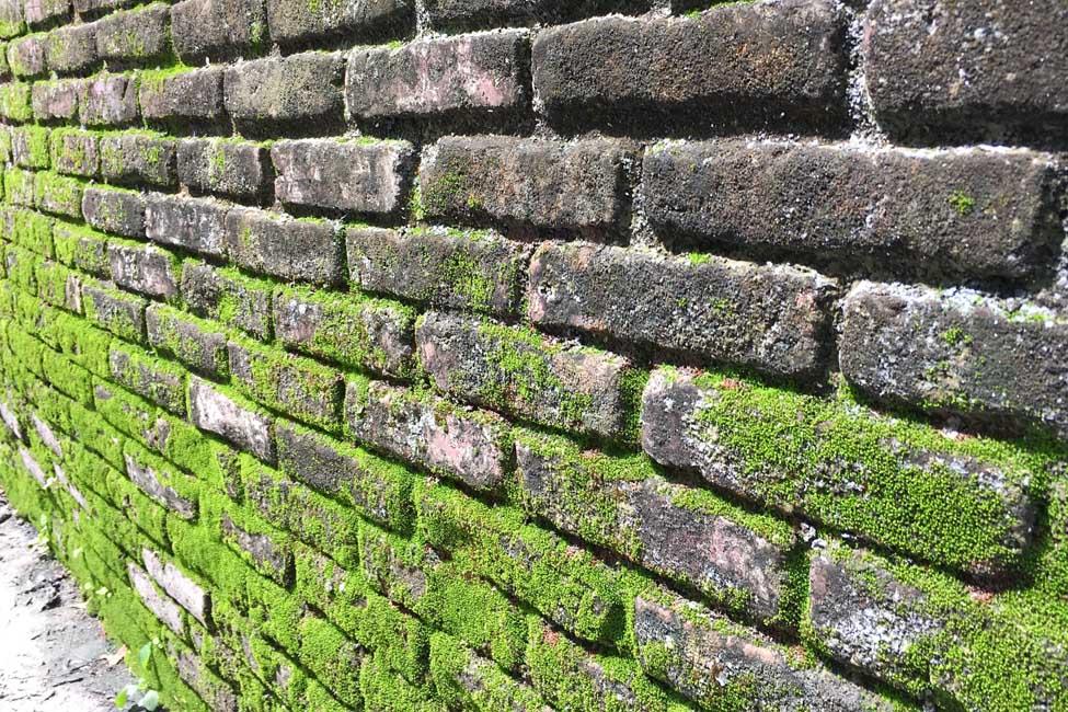 Мох на каменной стене